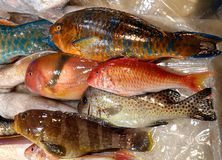 Colorful Parrot Fish for Sale Royalty Free Stock Image