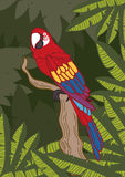 Colorful parrot - freehand drawing Royalty Free Stock Image