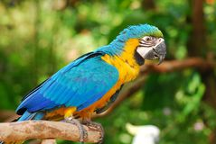 Colorful parrot in the garden Royalty Free Stock Photo