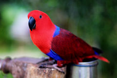 Colorful parrot. On a green background stock photos