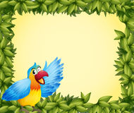 A colorful parrot and the green leafy frame Stock Images