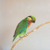 Colorful parrot lory at the zoo Royalty Free Stock Photography