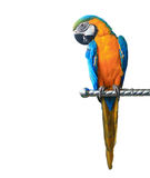 Colorful parrot macaw isolated Stock Image