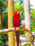 Colorful parrot macaws sitting on perch Royalty Free Stock Image
