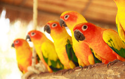 Colorful parrot in the parks - Stock Image Royalty Free Stock Images