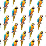 Colorful parrot pattern Stock Image