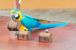 Colorful parrot. Royalty Free Stock Images