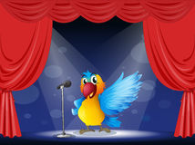 A colorful parrot performing on the stage Royalty Free Stock Image