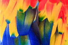 Colorful parrot plumage Stock Photography