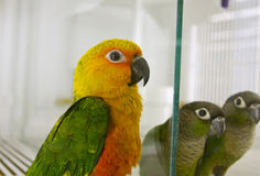 Colorful parrot Royalty Free Stock Photography