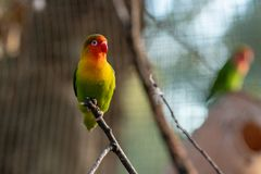 Colorful parrot is sitting on a branch royalty free stock images