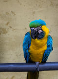Colorful parrot. Stock Photography