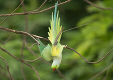 Colorful parrot in tree Stock Photography