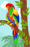 Colorful parrot on tree branch Royalty Free Stock Images