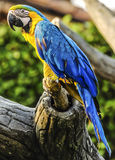 Colorful Parrot Royalty Free Stock Image