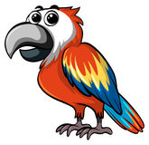 Colorful parrot on white background Stock Photo