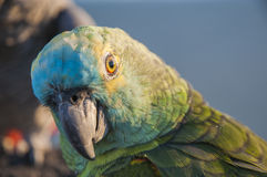 Colorful parrots Stock Images