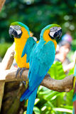 Colorful parrots royalty free stock photo