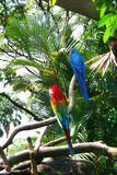 Colorful parrots. On tree branch stock photo