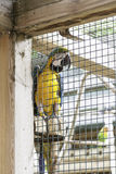 Colorful parrots in a cage. Detail of exotic birds royalty free stock photo