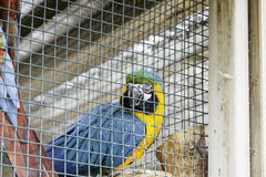 Colorful parrots in a cage. Detail of exotic birds stock photos