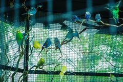 Colorful parrots in the cage. The parrots parked on the branch stock photo