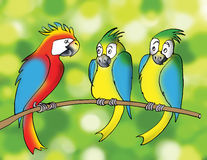 Colorful parrots, cartoon Royalty Free Stock Photo