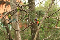 Colorful parrots. Birds standing on small branches of tree stock photography