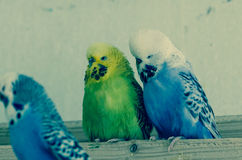 Colorful parrots Stock Photography