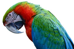 Colorful parrots head with isolated on white background.  stock photos