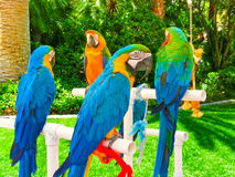 Colorful parrots macaws sitting on perch Stock Photo