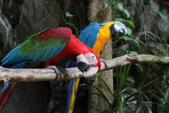 Colorful parrots saying. Royalty Free Stock Images