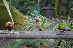 Colorful parrots standing on a fence. Colorful tropical parrots standing on a fence stock photos