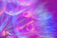 Colorful Pastel Background - vivid abstract dandelion flower Stock Photo