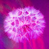 Colorful Pastel Background - vivid abstract dandelion flower Royalty Free Stock Photography