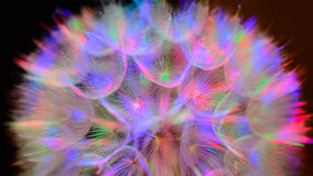 Colorful Pastel Background - vivid abstract dandelion flower Royalty Free Stock Image