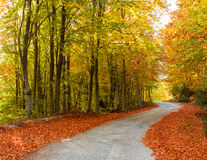 Colorful path Royalty Free Stock Photo