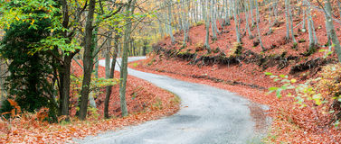 Colorful path Royalty Free Stock Image