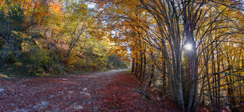 Colorful path in the forest. Misty deciduous forest in autumn with a path making the way through the beech trees Royalty Free Stock Photo