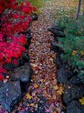 Colorful Pathway. Leaves on a pathway in Stack Park - Redmond, OR royalty free stock photos