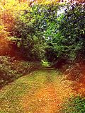 Colorful pathway on nature trail Royalty Free Stock Image