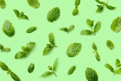 Green pattern of mint leaves royalty free stock photography