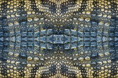 Colorful patterns of crocodile skin. stock photo