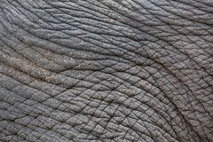 Patterns and skin of elephants. Colorful patterns and skin of elephants royalty free stock photos