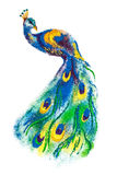 Colorful Peacock bird rangoli. Royalty Free Stock Image