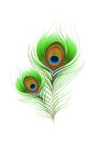 Colorful Peacock Feather Stock Photos