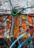 Colorful peacock feathers. Beautiful colorful peacock feathers shine royalty free stock photos