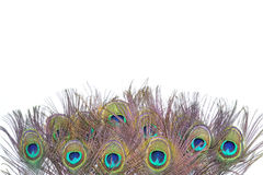Colorful peacock feathers. On white background royalty free stock photography