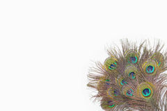 Colorful peacock feathers. On white background royalty free stock photo
