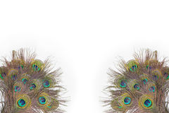 Colorful peacock feathers. On white background royalty free stock image